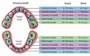 Dubai Laser Dentistry Specialist