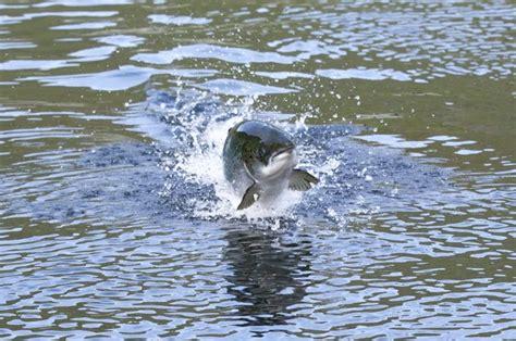 Comisión de Pesca propone avanzar en legalizar captura del