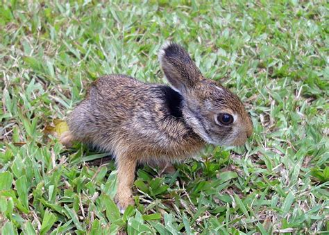 tips  helping baby wildlife face foundation