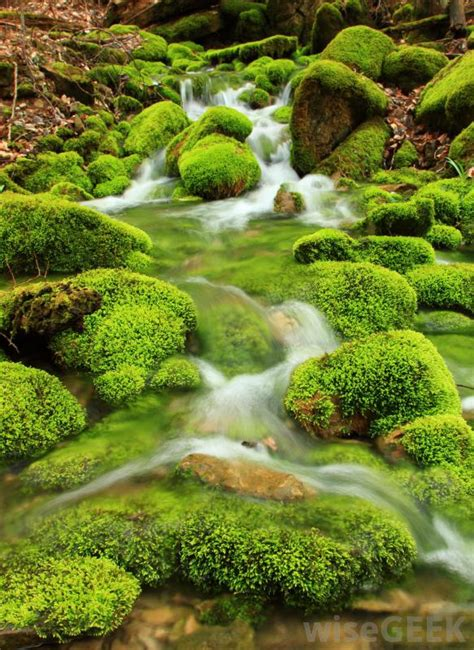 Images Of Moss What Is Moss With Pictures