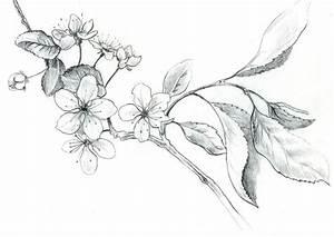 Dessin Fleur De Cerisier Japonais Noir Et Blanc : spring printemps cherry blossom cerisier en fleurs vrac ~ Melissatoandfro.com Idées de Décoration