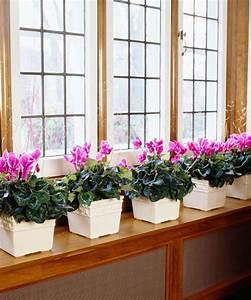 Plantes Pour Chambre : plantes de chambre dco bohme chic lit plante pot chemine chambre coucher tapis sol with plantes ~ Melissatoandfro.com Idées de Décoration