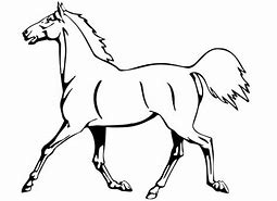 HD Wallpapers Appaloosa Horse Coloring Pages