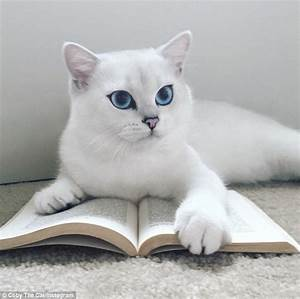Coby the blue-eyed cat wins over almost 300,000 fans on ...