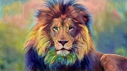 Wildlife Lion Desktop Backgrounds Animals Wallpapers Animal