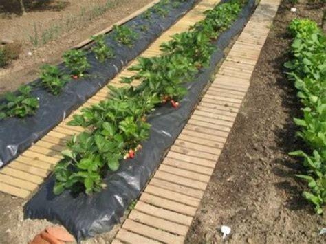 comment planter des fraisiers le bricolage de a 224 z