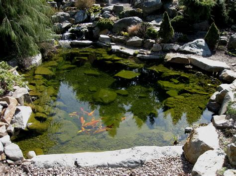 coy ponds pictures backyard coy ponds outdoor furniture design and ideas