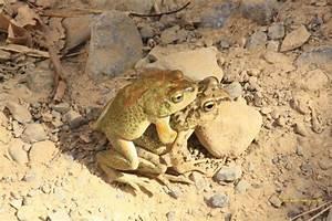 Tiere Unter Der Erde : tiere der erde ~ Frokenaadalensverden.com Haus und Dekorationen