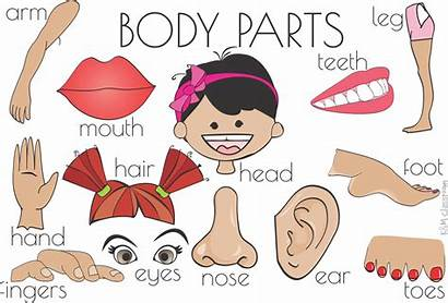 Flash Cards Parts Clipart Word Foot Esl