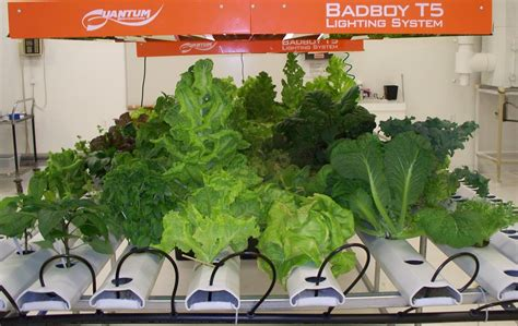 harvest moon hydroponics for indoor gardening hydroponics