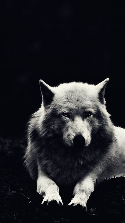 Wolf Phone Winter Wallpapers Screen Mobile Iphone