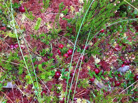 dzivei.eu - Vesels kā rutks: kādi vitamīni dzīvo rudens ...
