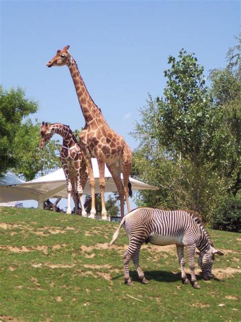 chambre d hote proche zoo de beauval chambre zoo de beauval chambre d hote beauval avec les