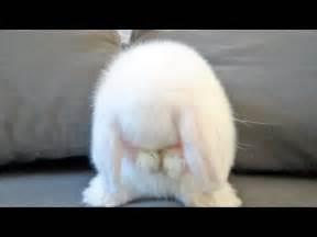 Cute Baby Bunnies Faces
