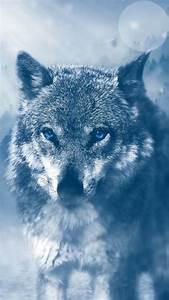 wild, wolf, 4k, wallpapers