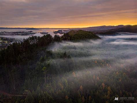 redwood sunrise fog adrian hodge photography