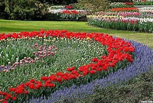 Flower Garden Hd Wallpaper