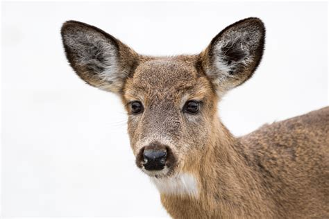 Deer Spotted Munching On Human Remains In Texas