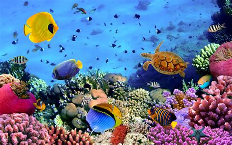 bureau aquarium fish corals turtle beautiful wallpaper hd