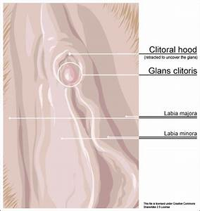 Clitoral Hood