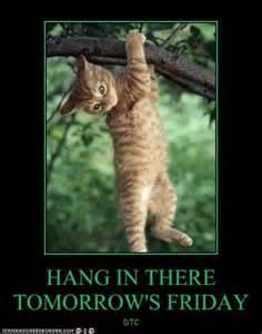 cat hang in there hang in there hang in there