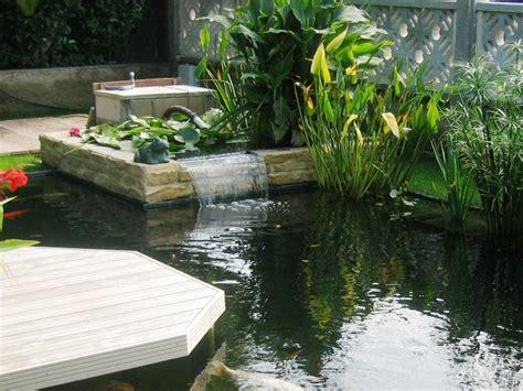 plante bassin exterieur 28 images plantes vivaces gramin 233 es et arbres dans le jardin
