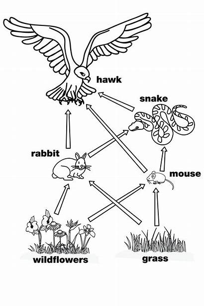 Web Coloring Pages Chain Simple Worksheets Worksheet