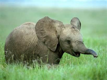 Elephant Elephants Adorable Face Babies Cutest Ever
