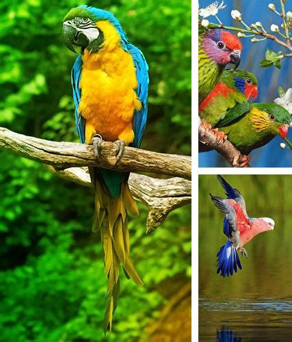 Free Live Animal Wallpaper For Android - android animals live wallpapers free