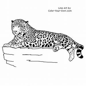 artist laying coloring jaguar drawing down grig3org With 2016 jaguar f type
