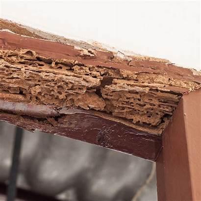Damage Termite Termites Much Cause Destruction Does
