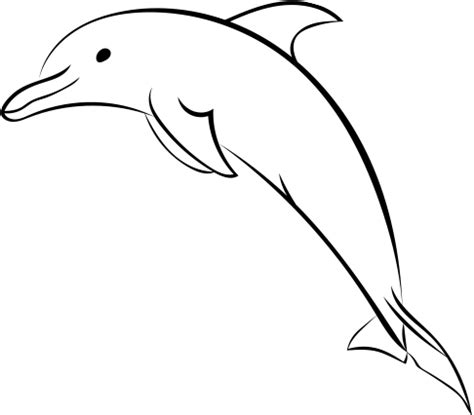 dolphin picture drawing  getdrawingscom