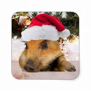 Pig Christmas Gifts Pig Christmas Gift Ideas on Zazzle
