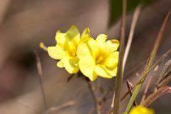 Wann Johannisbeeren Pflanzen : pflanzzeit f r knoblauch den besten zeitpunkt finden ~ Orissabook.com Haus und Dekorationen