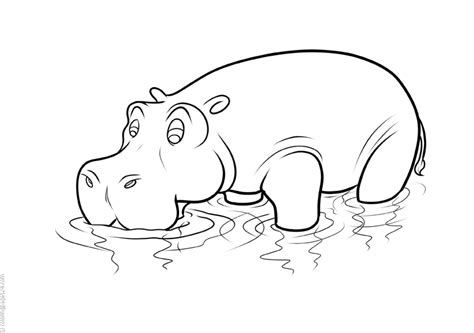 Hipopotamos 9 Dibujos para Colorear 24