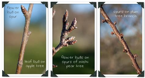 An Introduction To Pruning Fruit Trees Country Trading