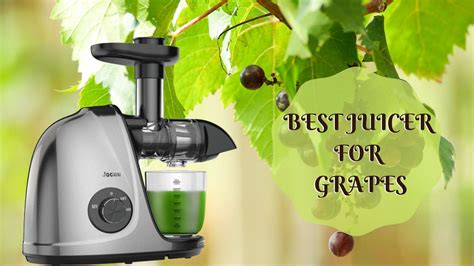 juicer grapes quickly juice fresh kitchen