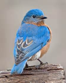 Most Beautiful Amazing Birds in the World