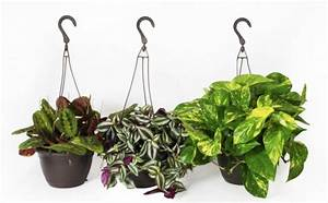 Plante Suspendue Intérieur : 8 ~ Teatrodelosmanantiales.com Idées de Décoration