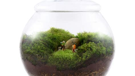terrarium twig desire this uncharted territory by twig terrariums