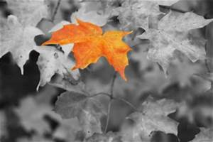 How to Create Black-and-White Photographs with Color ...