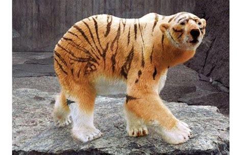 animorphs images  pinterest funny animals