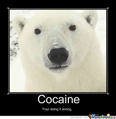 Bear Cocaine Meme - cocaine bear by jjh242 meme center