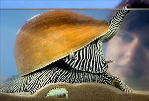 BBC - Birmingham - Nature - Treasure snail