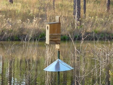 wood duck nest box  metal predator shield