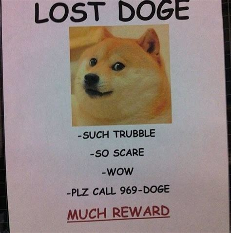 New Doge Meme - lost doge much reward doge