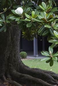 17 Best images about Arboles on Pinterest | Trees ...