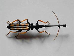 Großer Schwarzer Käfer Bilder : katalog kaefer insekten ~ Frokenaadalensverden.com Haus und Dekorationen