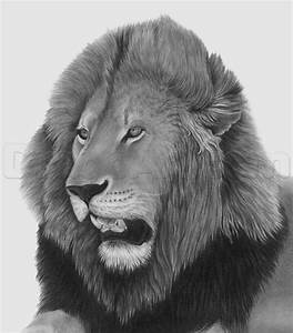 Learn How to Sketch a Lion Head, Male Lion, Great Plain ...