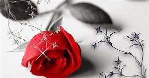 Schöne Bilder Liebe : blume bilder mit sch ne rote rose hd hintergrundbilder ~ Frokenaadalensverden.com Haus und Dekorationen